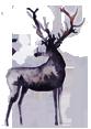 loch awe deer